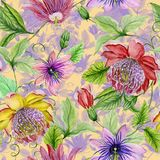 Schöne Leidenschaft blüht Passionsblume auf kletternden Zweigen mit Blättern und Ranken Botanischer Hintergrund Nahtloses Blumenm Stockfoto