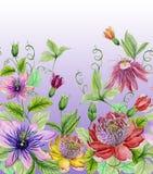 Schöne Leidenschaftsblumen Stockfotos