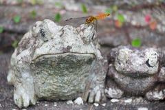 Schöne Libelle Lizenzfreie Stockfotografie