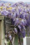 Schöne lila Blumen Lizenzfreie Stockfotos