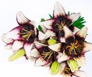 Schöne Lilie auf Weiß Stockfoto