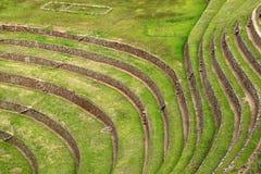 Schöne Linien von landwirtschaftlichen Terrasseninkaruinen von Moray Archaeological-Standort, heiliges Tal der Inkas, Cusco-Regio stockfotos