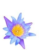 Schöne Lotosblume Stockbilder