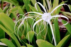 Schöne makro tropische Blume von der Dominikanischen Republik, Punta Cana lizenzfreie stockfotografie