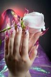 Schöne Maniküre der Hände mit einer Rose Lizenzfreie Stockbilder