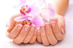 Schöne Maniküre mit rosa Orchidee auf dem Weiß Lizenzfreies Stockbild
