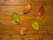 Schöne mehrfarbige Blätter auf hölzernen Brettern Stockfotografie