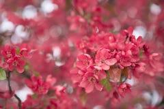 Schöne Michigan-Blüten Lizenzfreie Stockfotografie