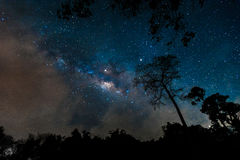 Schöne Milchstraßegalaxie auf nächtlichem Himmel im Forest Park Lizenzfreie Stockfotografie