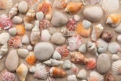 Schöne Mischung von weißen Steinen und von Muscheln auf Sand Stockfoto