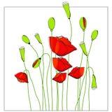 Schöne Mohnblumen Stockbild