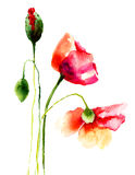 Schöne Mohnblumenblumen Stockfotografie