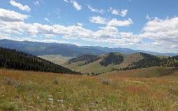 Schöne Montana-Felder und -blumen Stockfotos