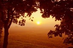 Schöne Morgenansicht durch Ahornholzzweige. Lizenzfreies Stockbild