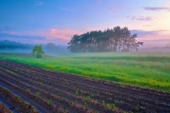 Schöne Morgenlandschaft mit Feld und Bäumen im Nebel. Stockfotografie