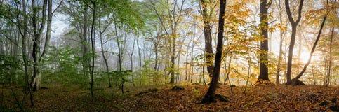 Schöne Morgenszene im Wald, Änderung von zwei Jahreszeiten Stockbild