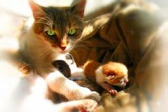 Schöne Mutterkatze mit hellgrünen Augen und ein Vorhang neugeboren Lizenzfreies Stockfoto