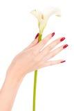Schöne Nägel und Finger mit Blume Lizenzfreie Stockfotos