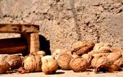 Schöne Nüsse stockfoto