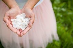Schöne Nahaufnahme von Frau ` s Händen mit den weißen Apfelblumenblättern Sommergartenhintergrund, draußen stockbild