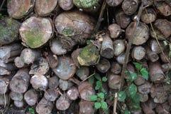 Schöne Nahaufnahme von Klotz von Bäumen in der Natur viele cutted Klotz Stockfotografie