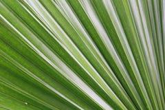Schöne natürliche Muster Stockfoto