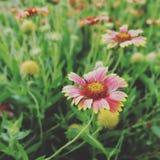schöne natürliche rosa Blumen im Park Stockbilder