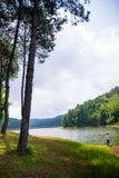 Schöne natürliche Szene des Grünwaldes und -sees Lizenzfreies Stockfoto