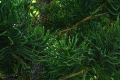 schöne Natur der Baumnahaufnahme grüne Farb Lizenzfreies Stockbild