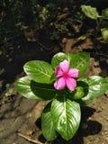Schöne Natur des süßen Blumenfotos Stockfotografie
