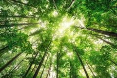 Schöne Natur am Morgen im nebelhaften Frühlingswald mit Sonne Lizenzfreies Stockfoto