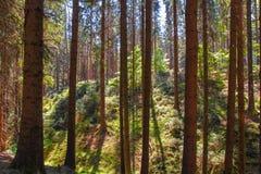 Schöne Natur am Morgen im nebelhaften Frühlingswald mit Sonne strahlt aus lizenzfreie stockbilder