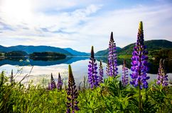 Schöne Natur Norwegen Lizenzfreies Stockfoto