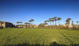 Schöne Natur, Palmen, Gras, Himmel und Häuser in Ägypten Stockfotografie