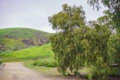 Schöne Naturlandschaft auf Ascot-Hügel-Park stockfoto