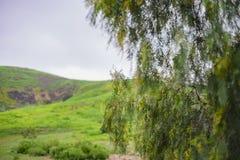 Schöne Naturlandschaft auf Ascot-Hügel-Park stockfotos