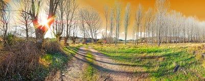 Schöne Naturlandschaft mit Bäumen und Weg Lizenzfreie Stockfotos