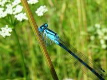 Schöne Naturszene mit Schmetterling Lizenzfreies Stockbild