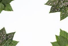 Schöne neue grüne Blattrahmen-Designidee mit Raum auf weißem Hintergrund Lizenzfreies Stockfoto