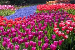Schöne niederländische Blumen lizenzfreies stockfoto
