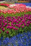 Schöne niederländische Blumen stockfotografie