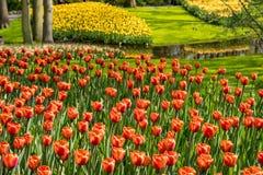 Schöne niederländische Blumen stockfoto