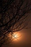 Schöne Niederlassung des Baums und nebeliger Sonnenaufgang gestalten morgens landschaftlich Lizenzfreies Stockfoto