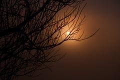 Schöne Niederlassung des Baums und nebeliger Sonnenaufgang gestalten morgens landschaftlich Lizenzfreie Stockbilder