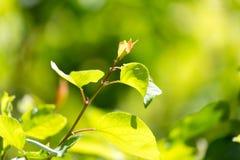 Schöne Niederlassung eines Baums mit grünen Blättern Lizenzfreies Stockbild