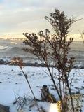 Schöne Niederlassungen auf Küste Lizenzfreies Stockfoto