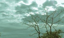 Schöne Niederlassungen im Himmel Stockfoto