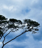 Schöne Niederlassungen mit dem blauen Himmel Lizenzfreies Stockbild