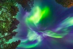 Schöne Nordlichter obenliegend Stockfoto