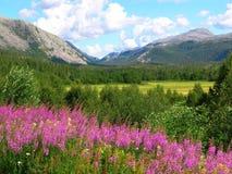 Schöne Norwegen-Natur lizenzfreie stockbilder